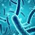 βασικά είδη βακτηρίων