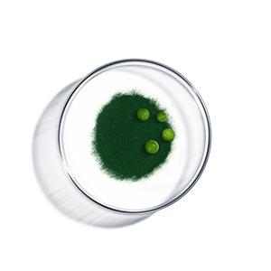 v_ingredient_peptides.jpg